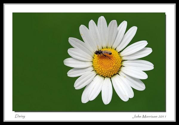 daisy by bayleaf1