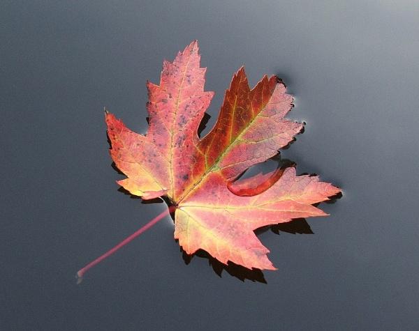 Forever Autumn by Focus_Pocus