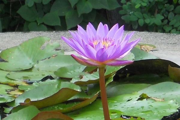 Nilkamal by mahendra