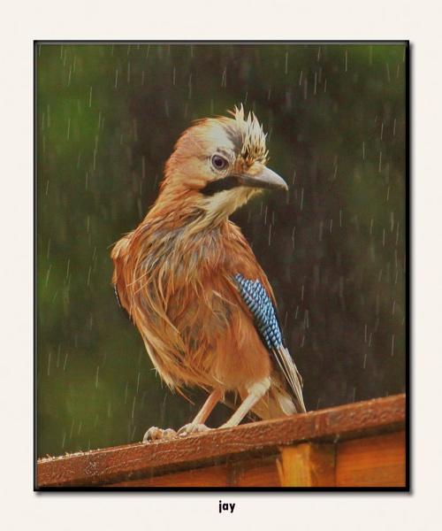 please no is it raining jokes by hotwings