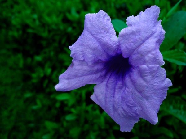 Purple Flower by lobski