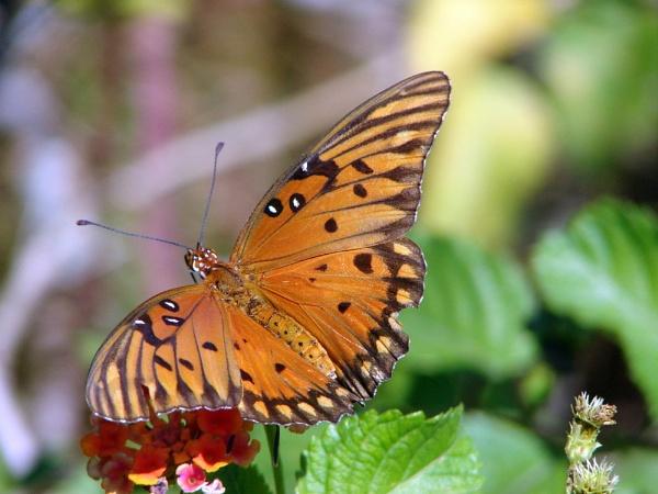 Butterfly by JDW1010