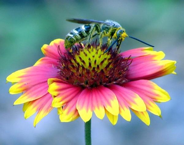 Pollinating by JDW1010