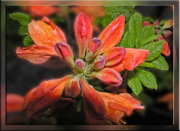 FLOWER by cjl47