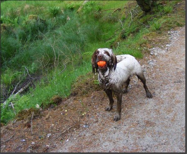 Found the ball mum! by Jolind