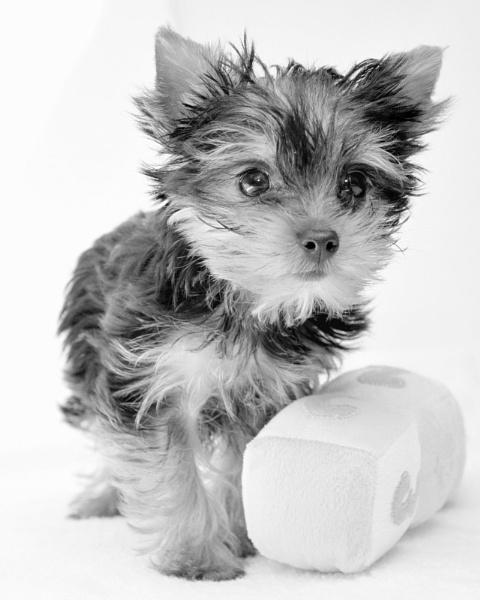 Puppy Stare by EventHorizon