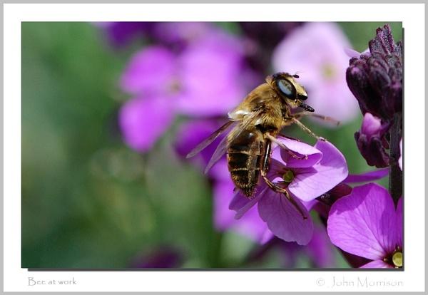Bee at work by bayleaf1