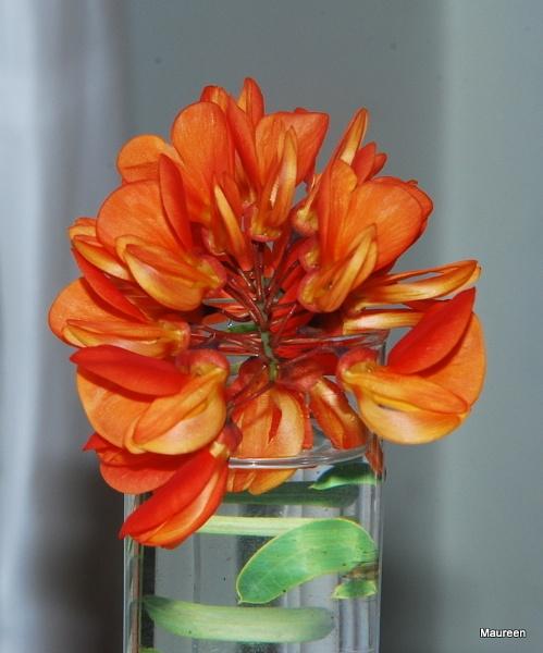 Orange by HarrietH
