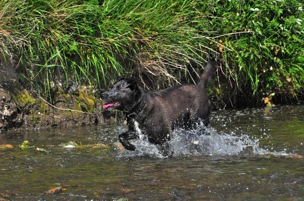 Splish splash! by andywiseman