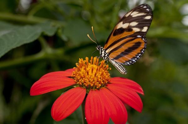 Butterflower...Power? by SpiroSpiteri