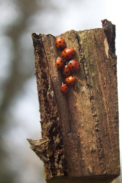 Ladybird, Ladybird by marktc