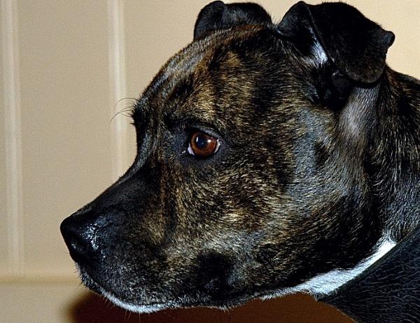 Portrait of Sadie by rhol2