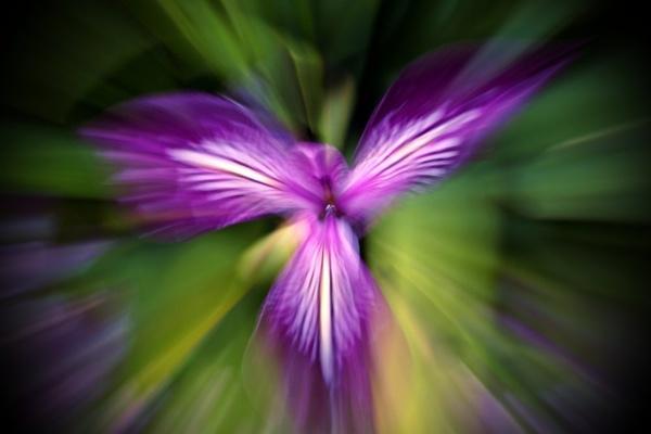 Purple Heaven by Premnay_Matt