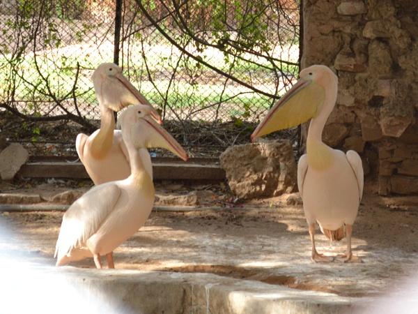 zoo by Prashant1610