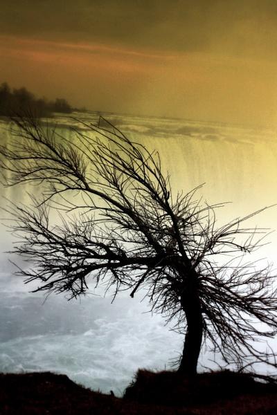 Vivre Tree by museana
