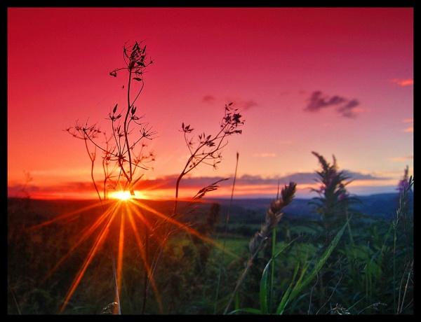 Rosebay Sunset by JealouslyBlue