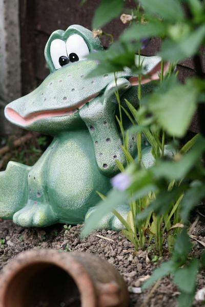 frog eyes by kentbirder