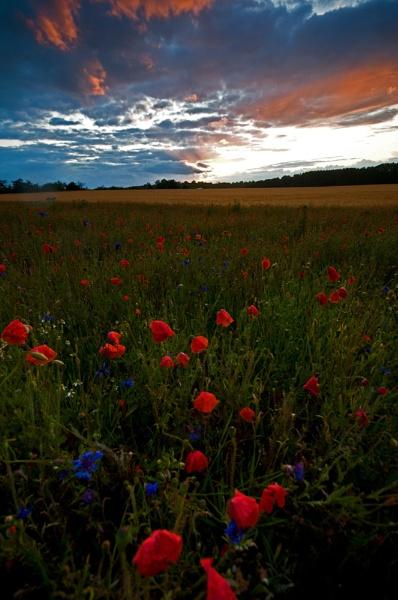 Poppy Sunset by StuartAt