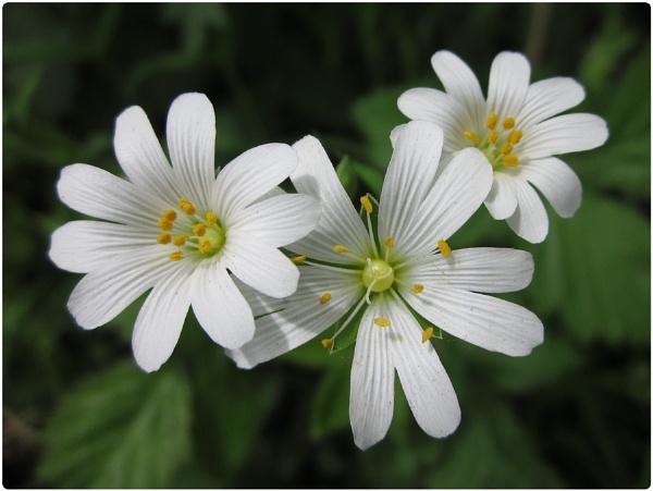 Spring Flowers by Glostopcat