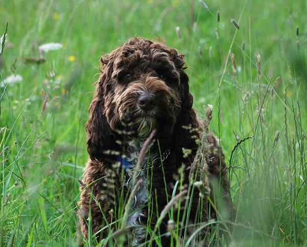 Merlin in the meadow by Oldroadster