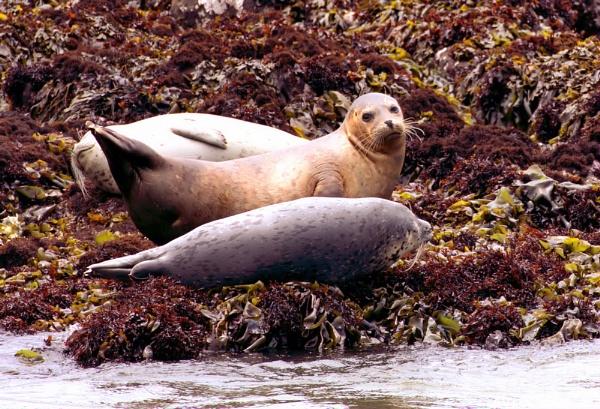 Seals by jonathanbp