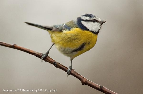 Bird1 by lammypaul