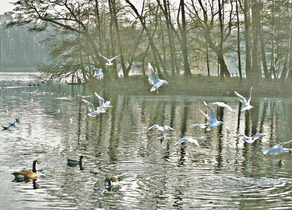 Ripples by Hurstbourne