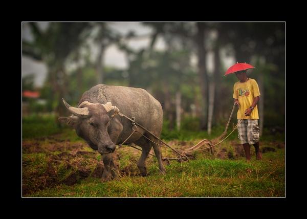 Philippine Carabao by Saigonkick