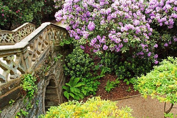 Rhododendron Walk 2 by VivienO