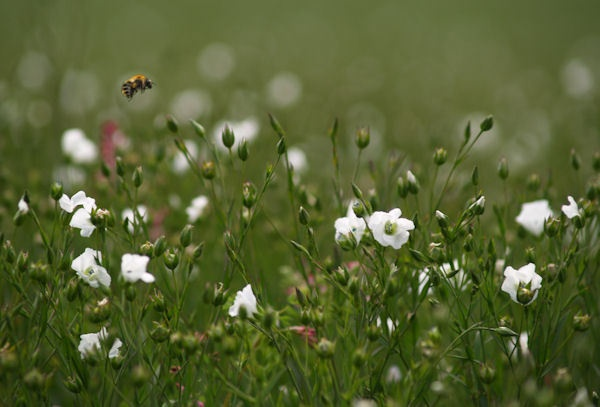 Among the Flowers by peterkin