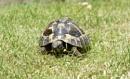 Tortoise by samlw68