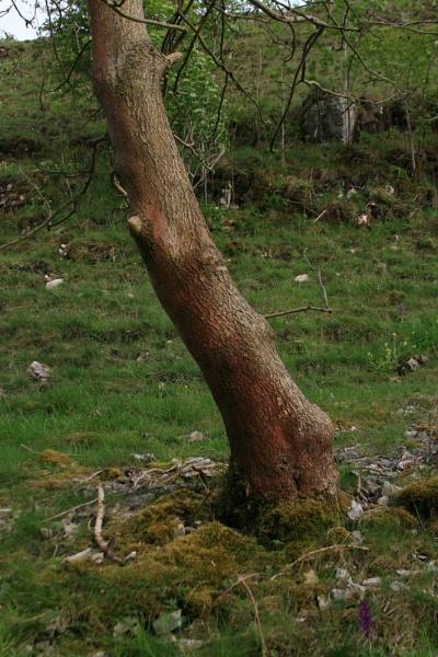 tree by jimbob5643