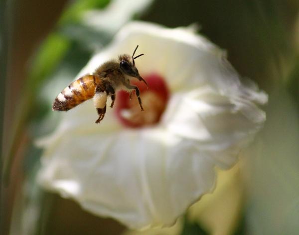 BEE by HamedKhazaei