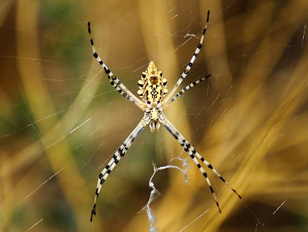 Spider by HamedKhazaei