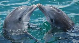 Dolphin Love...........