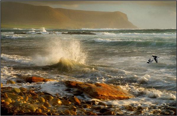 Orkney Shoreline by MalcolmM