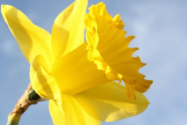 Spring Flower by sallen75
