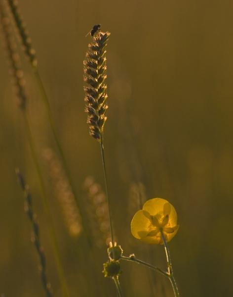 grass by tricky66