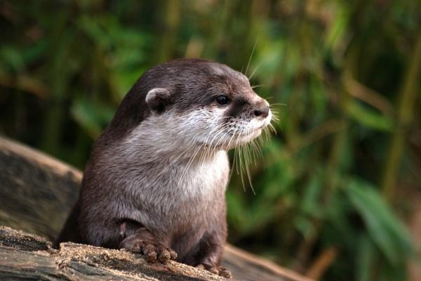 Otter by stevebidmead