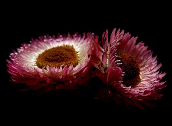 Petals by stevebidmead