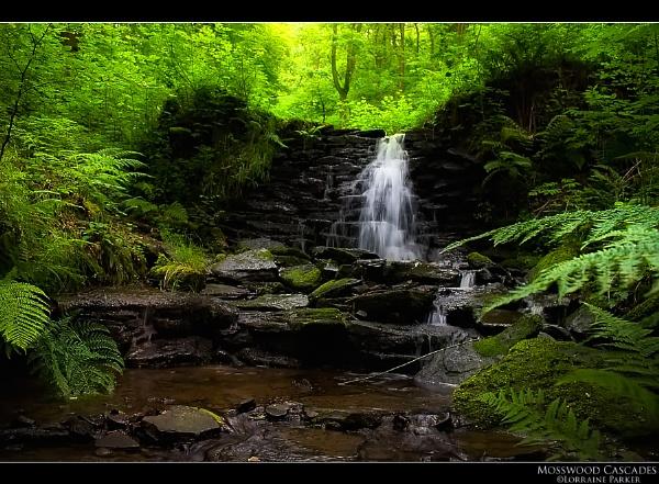 Mosswood Cascades by skye1