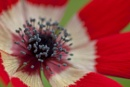 Anemone by Eightball at 21/06/2011 - 11:12 PM