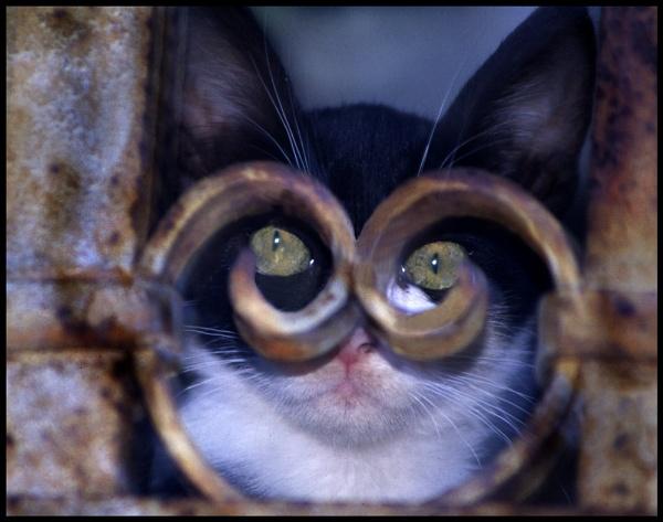 CAT by cornish_chris