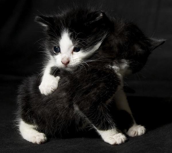 Kitty Kuddles by TheFotoGraffer