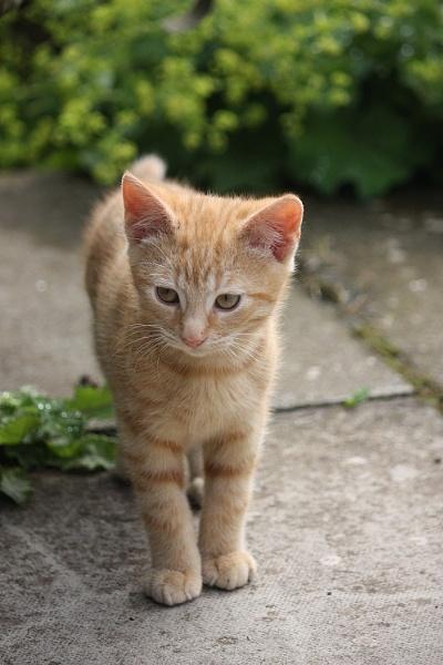 Ginger Ninja by HeatherR