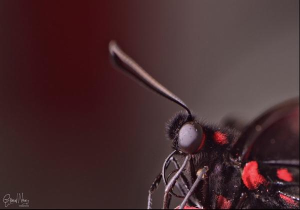 Black n Red by gnovey