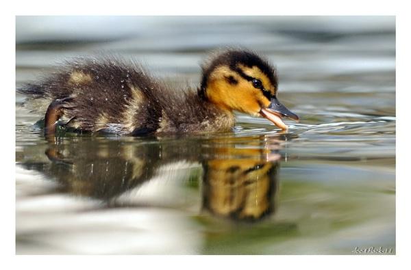ripples by photoflacky