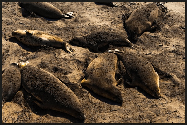 Seals by havecamerawilltravel