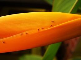 Ants trail...