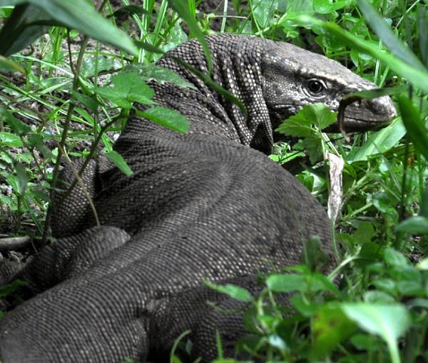 snake eater by jayatu